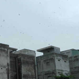 Bùng nổ nuôi chim yến tự phát tại Bình Thuận, gây nhiều tiếng ồn-Yensaodongduong.com