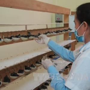 Nghề nuôi chim yến tại Việt Nam: Chưa xứng với tiềm năng-Yensaodongduong.com