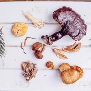 Công dụng của nấm linh chi đối với sức khỏe và sắc đẹp-Yensaodongduong.com